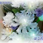 夜に輝く花