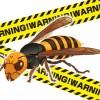 ハチの大発生にご注意!